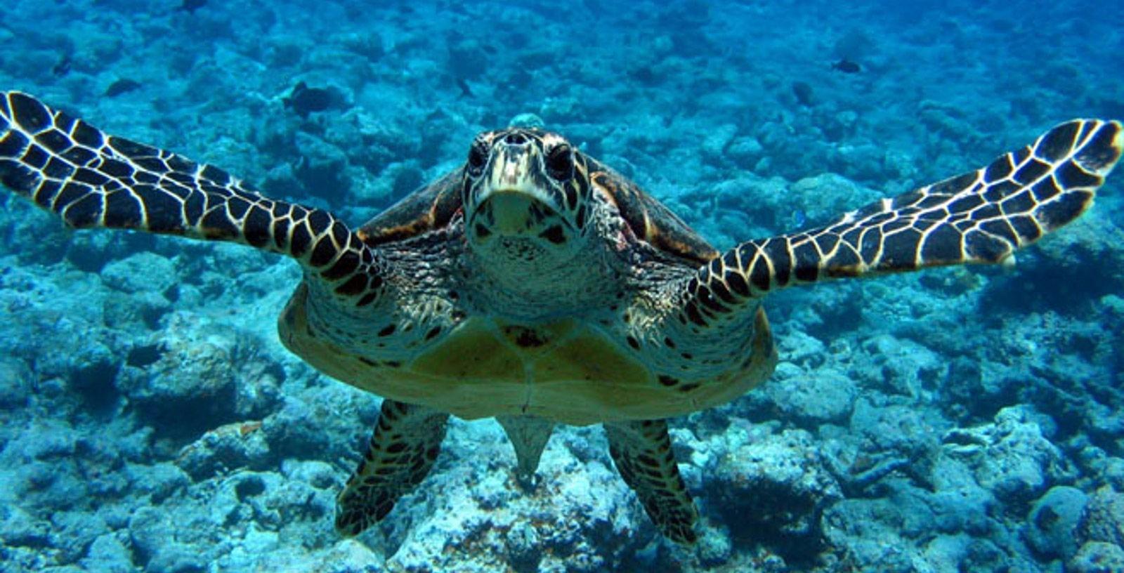 Sea_Environmental_Protection_Sao-Paulo_Brasil_IDOM_2