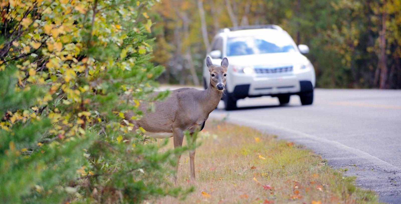 Permeabilidad fauna carreteras_Diputacion Foral Bizkaia_IDOM_0